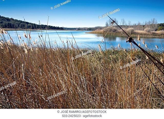 Concejo lagoon. Lagunas de Ruidera Natural Parck. Albacete. Castilla la Mancha. Spain. Europe