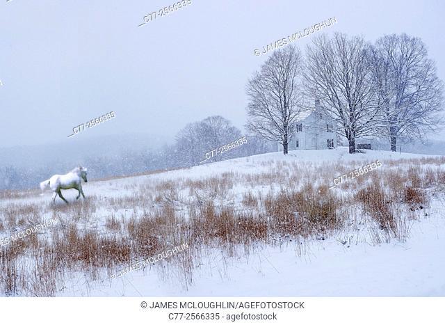 Horse, Horses, winter, snow, white horse