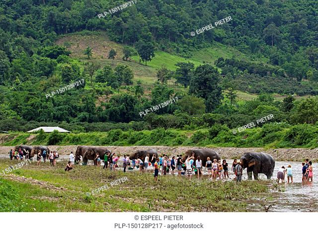 Tourists washing Asian elephants (Elephas maximus) by throwing water over them in river at the Elephant Nature Park, rescue and rehabilitation center in Chiang...