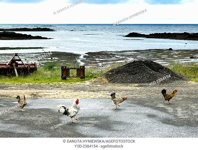 small farm on the coast of Atlantic Ocean, Western Regions, close to Akranes, Iceland
