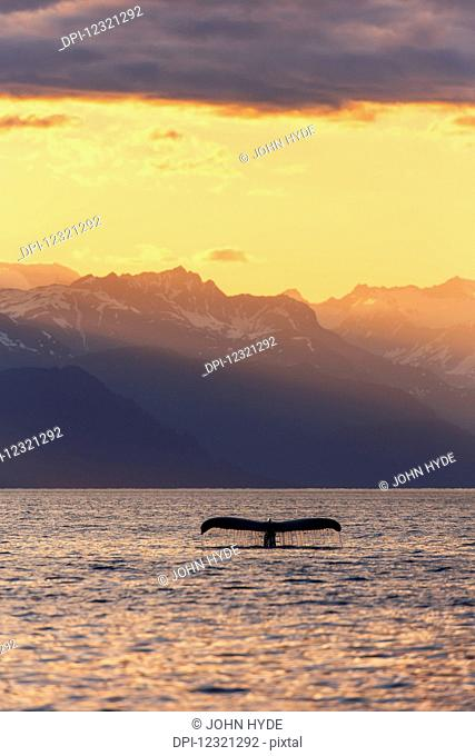 Fluke of a Humpback Whale (Megaptera novaeangliae) at sunset, Lynn Canal, with the Chilkat Mountains in the background, near Juneau; Alaska