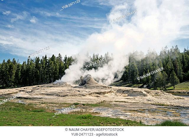 Grotto geyser-most unusual Yellowstone National Park geyser, Wyoming, USA