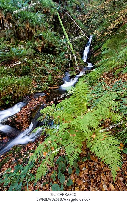 fern at a waterfall in a forest, Spain, Navarra, Pyrenees, Selva de Irati