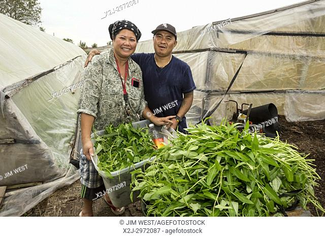 Rosharon, Texas - Cambodian immigrants Patty Ly, 50, and Sompong Ly, 48, grow water spinach in their south Texas greenhouses