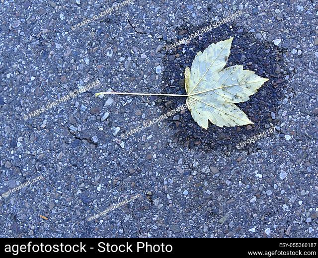 autumnal colored leaf on a street in a small water pool