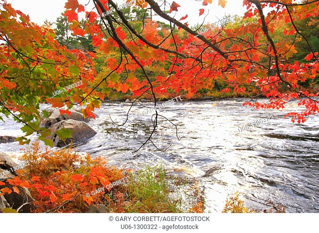 autumn color along a river in north america