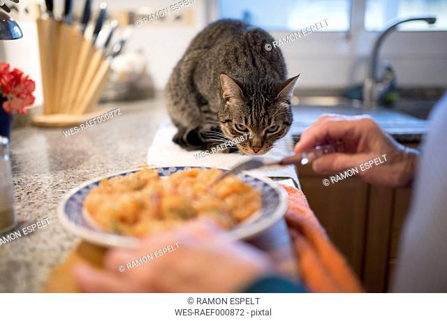 Tabby cat watching owner preparing food in the kitchen