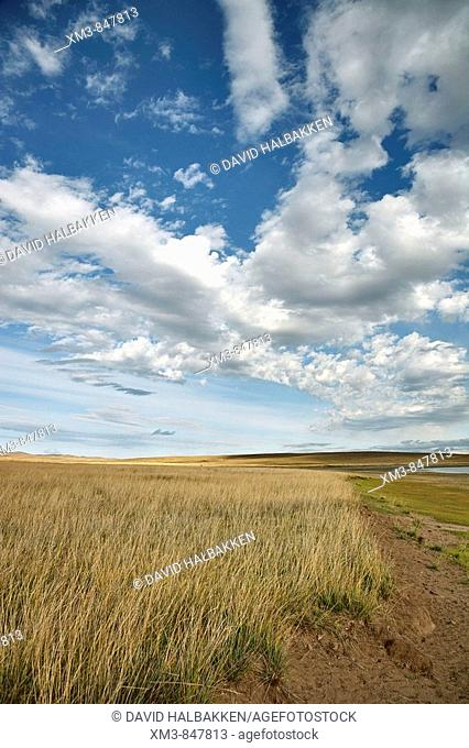 Grasslands at the shore of Oogi Lake, north central Mongolia