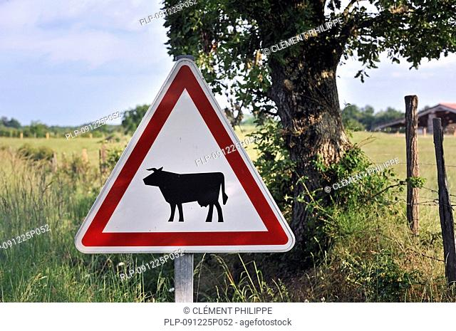 Warning sign / Traffic sign for cows / cattle crossing the road, La Brenne, France