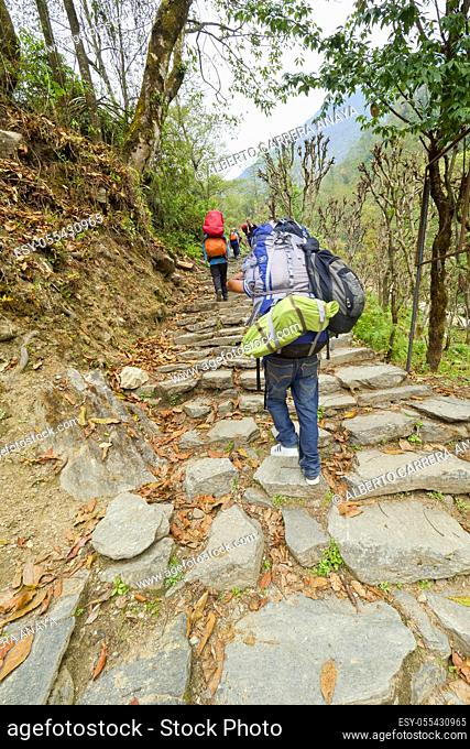 Hikkers on Route, Mountain Footpath, Trek to Annapurna Base Camp, Annapurna Conservation Area, Himalaya, Nepal, Asia