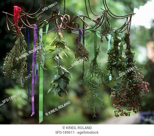 Fresh herbs hanging up to dry