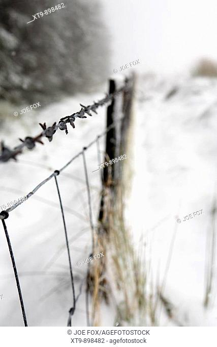 barbed wire fence coated in snow and ice on the edge of a forest county antrim northern ireland uk