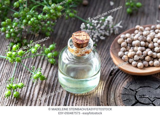 A bottle of essential oil with coriander seeds and cilantro plant