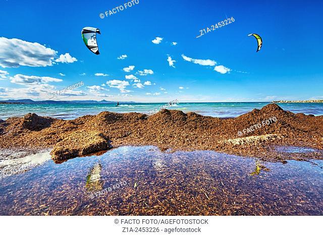 Mediterranean tapeweed washed ashore. Denia. Alicante. Valencia Community. Spain