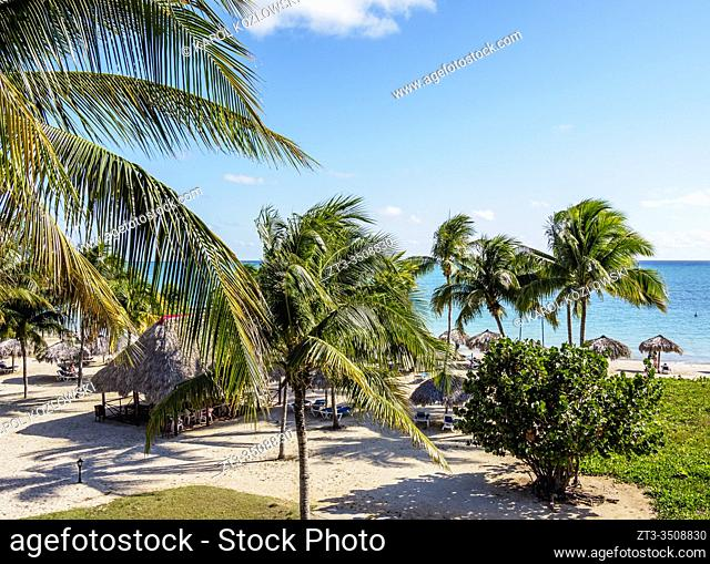 Palm Trees at Playa Ancon, Trinidad, Sancti Spiritus Province, Cuba