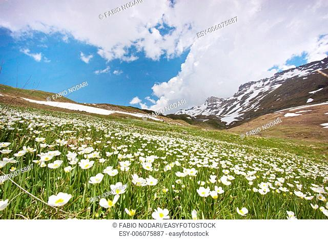 Meadow with flowers on mountains