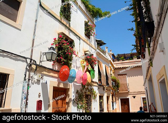 Parasols, flowers and windows. City of Cordoba, Andalucia, Spain, Europe