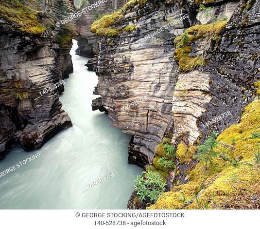 Athabasca River in Jasper National Park. Alberta, Canada