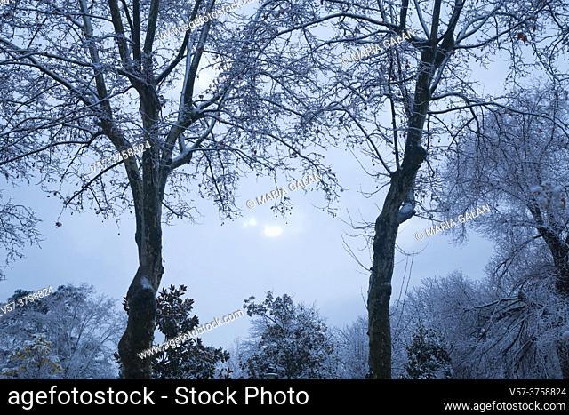 Snow covered Retiro park. Madrid, Spain
