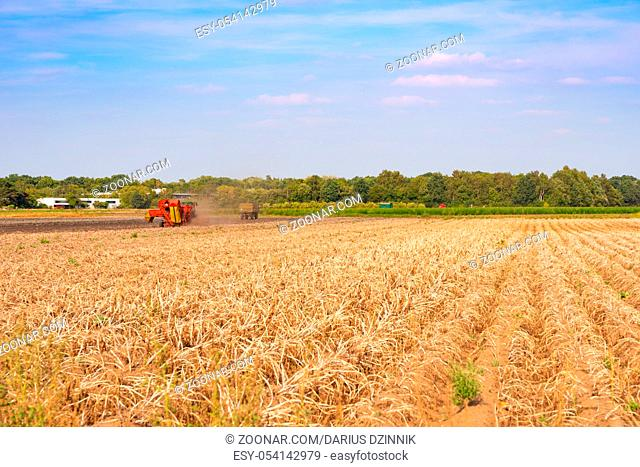 A modern machine potato harvest in autumn