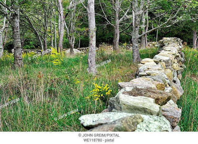 Field and stone fence, Chilmark, Martha's Vineyard, Massachusetts,, USA