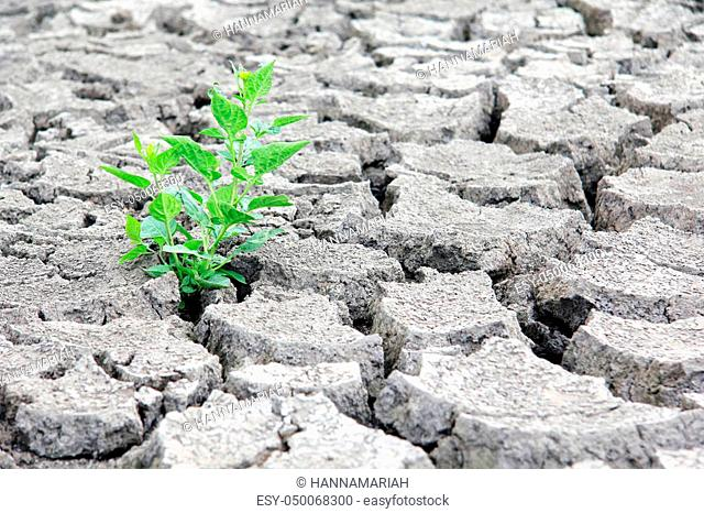 Drought cracked river bed. Climate change concept