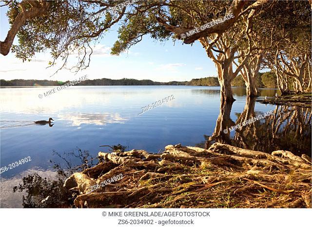 Lake Ainsworth, Lennox Head, NSW, Australia
