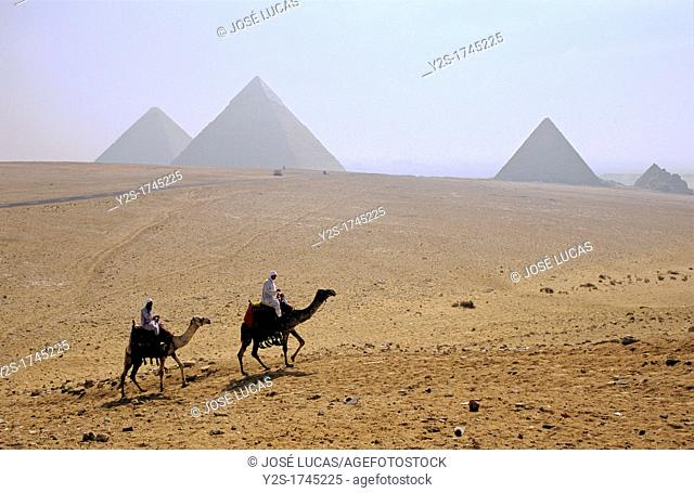 Camels and Pyramids, Giza, Cairo, Egypt