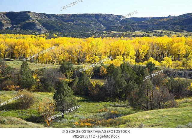 Autumn cottonwood near the Little Missouri River, Theodore Roosevelt National Park-North Unit, North Dakota