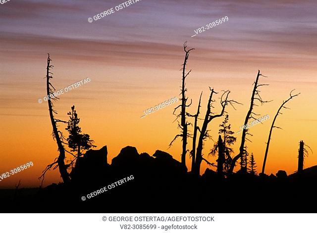 "Snag sunrise from Lava River Trail, McKenzie Passâ. ""Santiam Pass National Scenic Byway, Deschutes National Forest, Oregon"