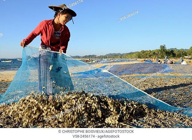 Myanmar, Rakhine State, Ngapali beach, Gyeik Taw village, Woman putting fresh fish to dry