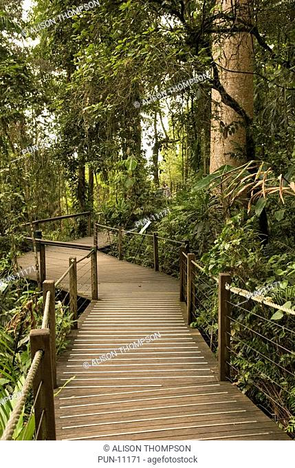 Rainforest boardwalk in Barron Gorge, Queensland, Australia