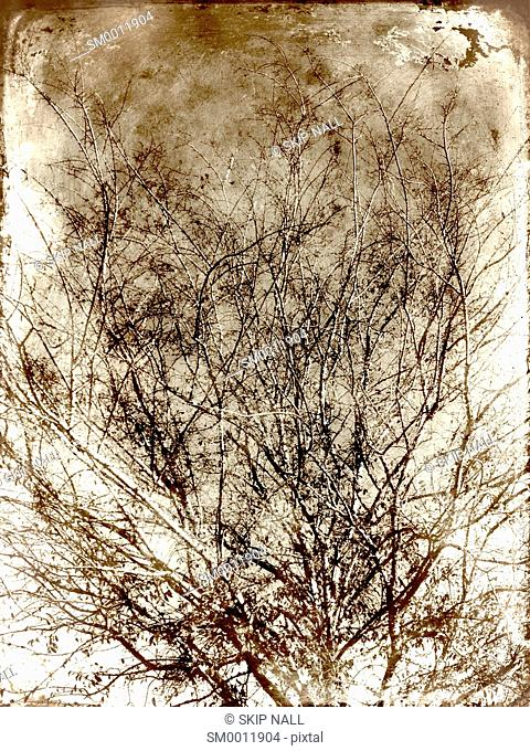 The branches of a tree bare of leaves in the winter