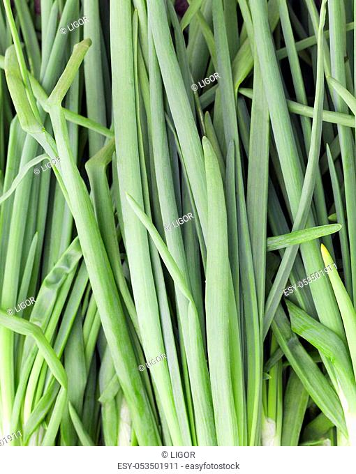 photographed close-up green onions feathers, gathered together at harvest time