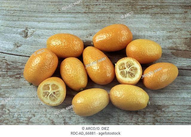 Kumquats Fortunella spec