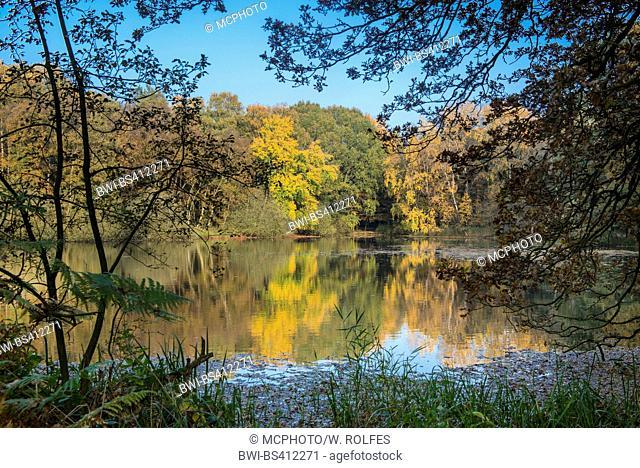autumn at the lakes Ahlhorner Fischteichen, Germany, Lower Saxony, Oldenburger Muensterland, Ahlhorn