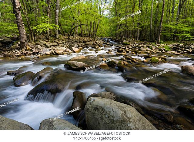 Spring on the Middle Prong of the Little Pigeon River in the Greenbrier area of the Great Smoky Mountains National Park in Tennessee