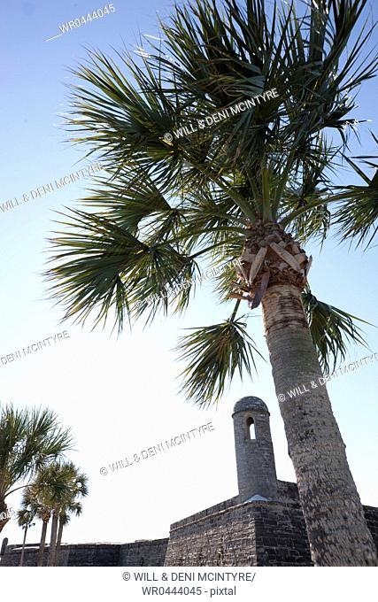 Palm Tree at Castillo de San Marcos