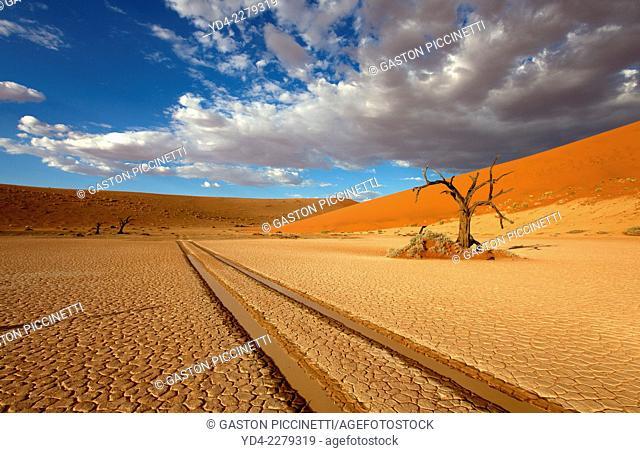 Camelthorn dead tree (Acacia erioloba), Hidden Vlei, Namib-Naukluft National Park, Namib desert, Namibia
