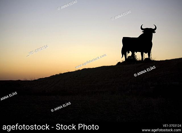 Andalusian countryside landscape with bull, Andalucia, Spain, Europe