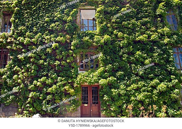 Overgrown wall of Conservatoire et Jardin Botaniques, Conservatory and Botanical Gardens, Geneva, Switzerland