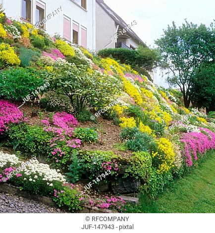 rockery with different flowers