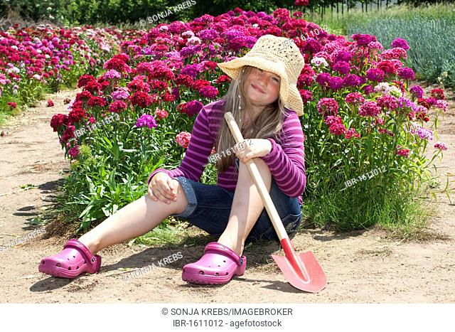 Girl, 8 years old, sitting with a spade at a field of Sweet William carnations
