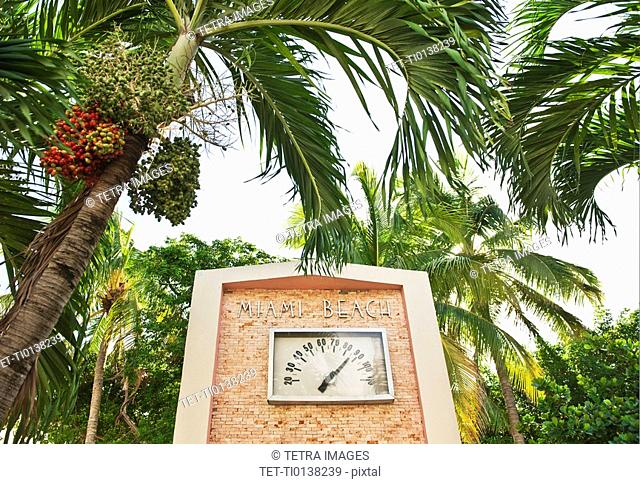 Palm trees and thermometer