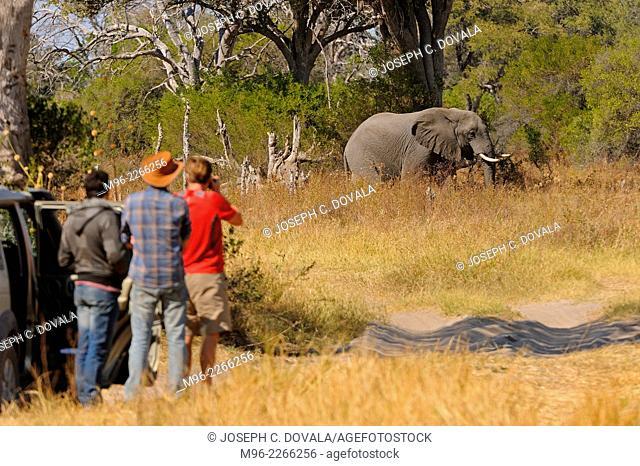 Group of tourists outside vehicles, Moremi, Botswana, Africa