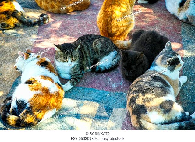 A lots of cats are relaxing outdoors