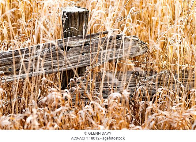 Split rail fence in autumn grasses with frost, near Fergus, Ontario, Canada