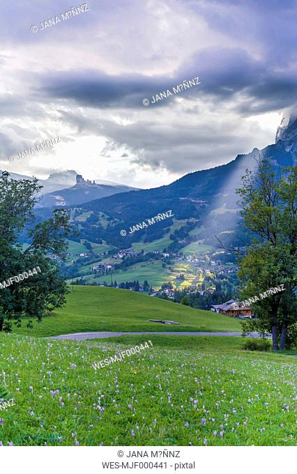 Italy, Province of Belluno, Veneto, Cortina d'Ampezzo, autumn crocuses at alpine meadow