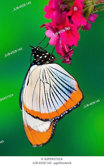 Butterfly mettmann
