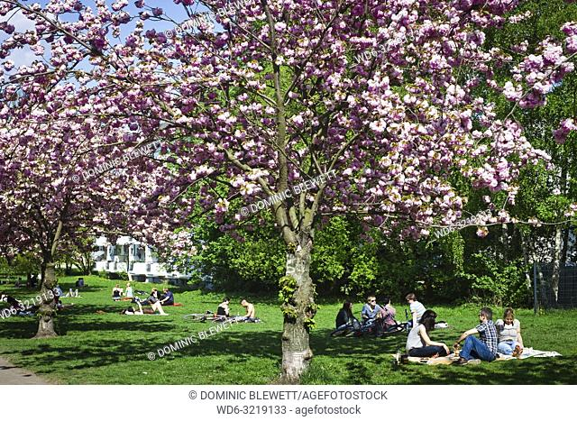 People enjoy the spring sun in a park with cherry blossom trees in Berlin, Germany